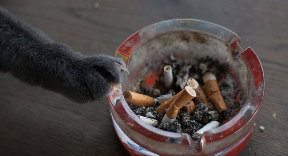 Give up smoking – for your pet's sake